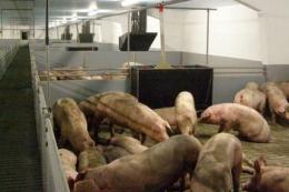 Розпочалася робота українсько-європейського проєкту в сфері безпечності харчових продуктів, здоров'я та благополуччя тварин