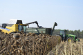 ІМК отримала рекордну врожайність соняшнику