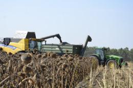 Показники урожайності соняшнику на Запоріжжі погіршили шкідники та хвороби
