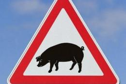 АЧС у Нігерії викосила вже сотні тисяч свиней
