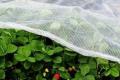 Агроволокно має слабший парниковий ефект, порівняно з плівкою, але ефективніше у спеку