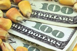 Експорт вітчизняної кукурудзи у поточному сезоні просяде на 5%, - прогноз