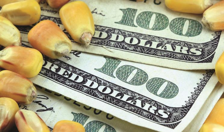 Ціни на кукурудзу відновили зростання