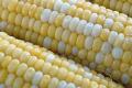 Вміст жиру в зерні кукурудзи зменшується при додаванні міндобрив, - дослідження