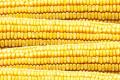 У холдингу «Консалт агро» отримали зерно кукурудзи вологістю 15-17%