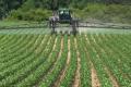 Ацетохлор більш ефективний у посівах кукурудзи, ніж пропізохлор