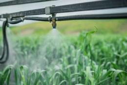 Як правильно вносити стартові фосфорні й основні добрива під озиму пшеницю