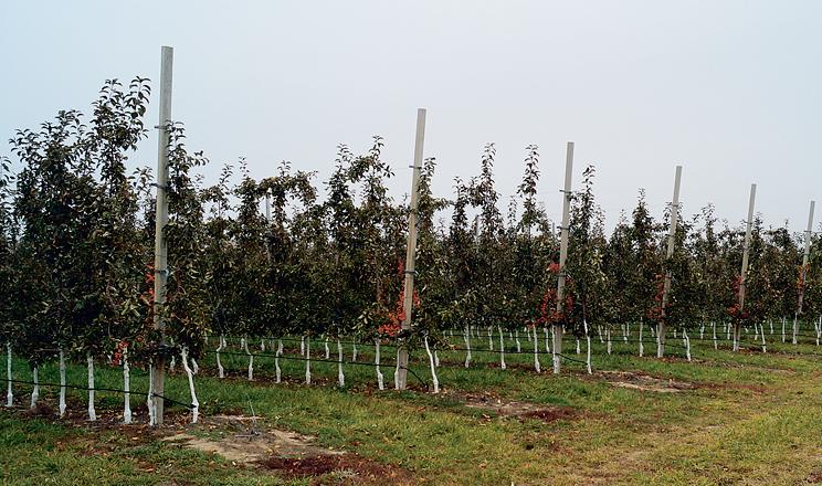 Виклики сезону та підготовка саду до зими
