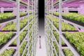 Учені отримали 5 млн євро на розробку вертикальних ферм