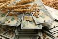 Закупівельні ціни пшениці в східних областях - одні з найнижчих в Україні