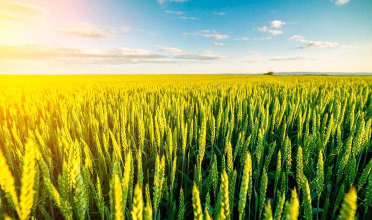 Як виростити фермера?