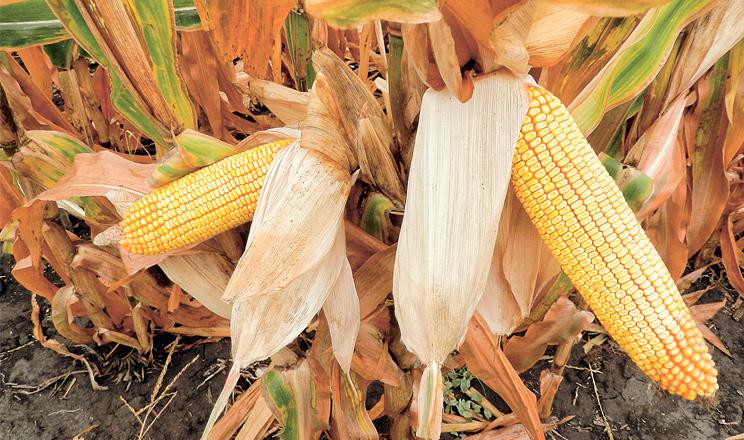 Урожайність без ризиків