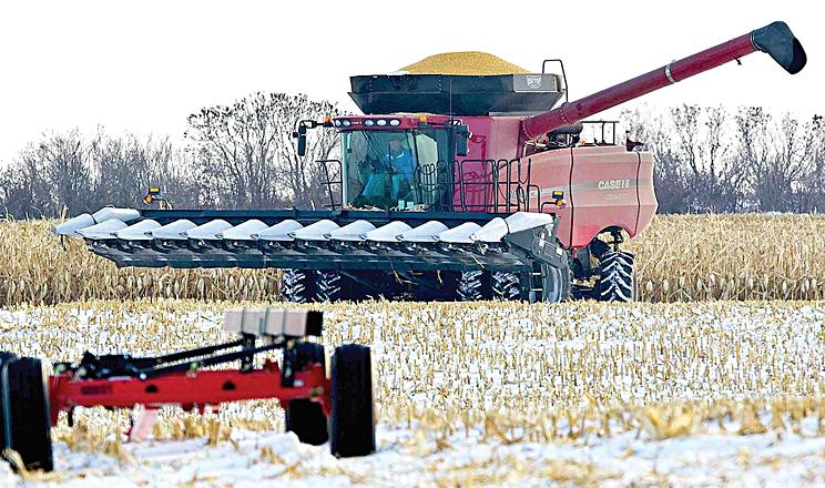 Як зібрати вологу кукурудзу