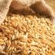 Експорт українського ячменю до Китаю зріс утричі
