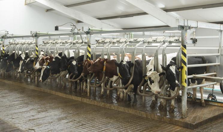 «Агропродсервіс» виробив у 2019 році 11,3 тис. тонн молока