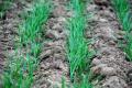 У Південному Степу критичні запаси вологи в ґрунті