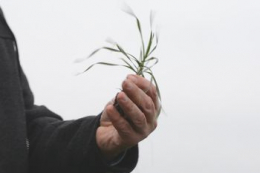 Які помилки агронома можуть зумовити стрес у рослин