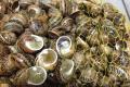 Тернопільські фермери готові сформувати ринок равликів в Україні