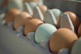 Гонконг змінив умови ввезення українських яєць
