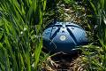 Growers Edge разом із CropX зменшать витрати фермерів