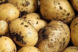 Експертка порадила посилити карантинні вимоги на імпортну картоплю