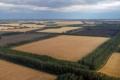 Лісосмуги підвищують урожайність зернових на 20%, – експерти