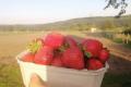 Полуничний фермер продає не ягоди, а емоції