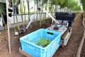 Японські фермери орендують робота-збирача овочів