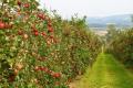 Плодоовочева галузь — чи не єдина виграє від доступу до ринку землі, — економіст