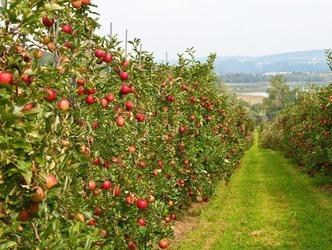 Садівник розповів про два шляхи зменшення ручної праці