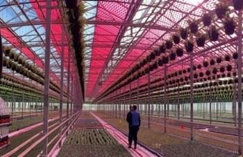 Електроенергія з «відходів» світла знижує витрати на тепличне вирощування