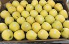 У «Саду Буковини» планують експортувати яблука через низькі ціни