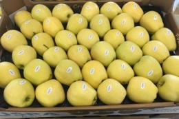 Компанія USPA fruit відправила першу партію українських яблук до Дубаю