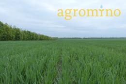 Agromino в 2019 році збільшила потужності зернозберігання до 121 тис. тонн