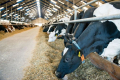 У 2019 році молоко залишилося найрентабельнішим продуктом у тваринництві