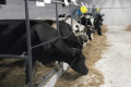 На Рівненщині відкрили десяту сімейну молочну ферму
