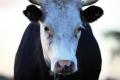 Молочний сектор потребує значно більшої підтримки, ніж у проєкті держбюджету-2021