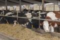 «Агропродсервіс» планує вийти на китайський ринок м'яса