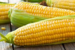 Дохід від виробництва насіння в Україні вищий, ніж товарних культур