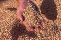 Україна експортувала більше мільйона зернових