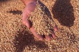 Пшениця в портах дорожчає