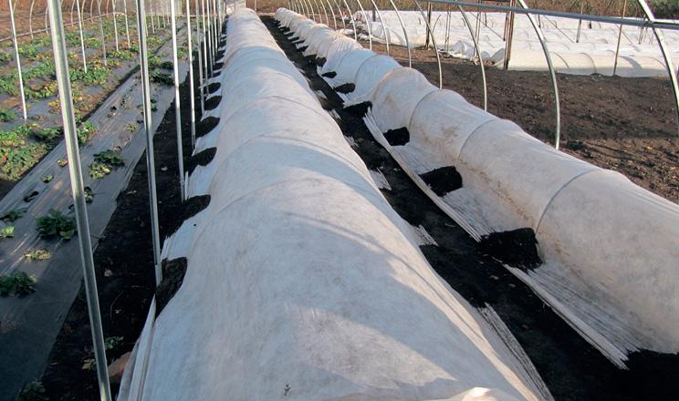 Агроволокно для високого та раннього врожаю