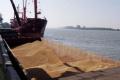 Поставки української пшениці на експорт з початку сезону перевищили 14 млн. тонн