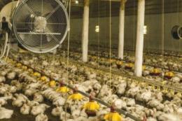 Як зменшити витрати на вентиляцію в пташниках