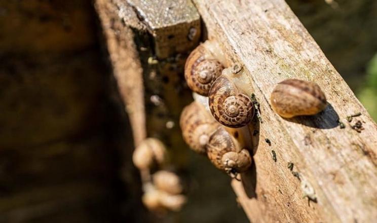 Ринок равликових ферм в Україні зростатиме, поки їхня кількість не сягне 3 тис.