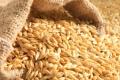 На елеваторах продовжують знижуватися ціни на фуражний ячмінь