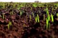 Визначено сприятливі запаси продуктивної вологи для розвитку рослин на різних ґрунтах