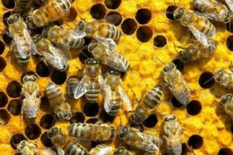 За теплої зими є ризик втратити щонайменше 20% бджолосімей