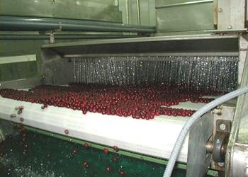 Плодову продукцію дешевше охолоджувати водою