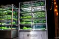 Мікротеплиця здатна виростити у 13 разів більше зелені, ніж у відкритому ґрунті
